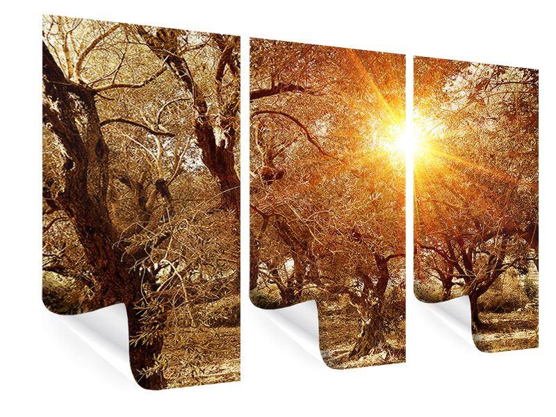 Poster 3-teilig Olivenbäume im Herbstlicht