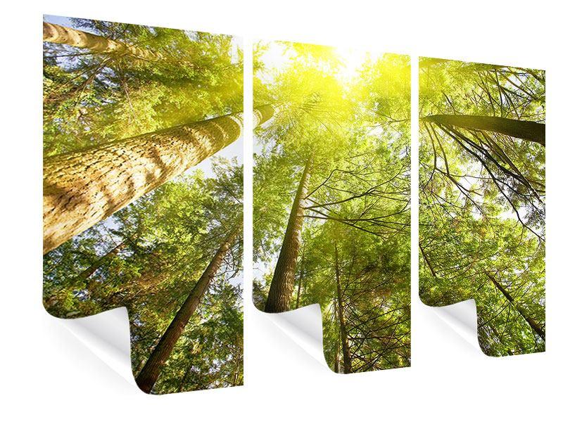 Poster 3-teilig Baumkronen in der Sonne