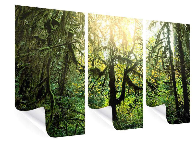Poster 3-teilig Verträumter Wald