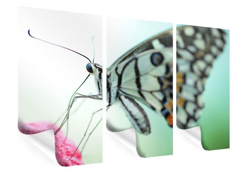 Poster 3-teilig Schmetterling XXL