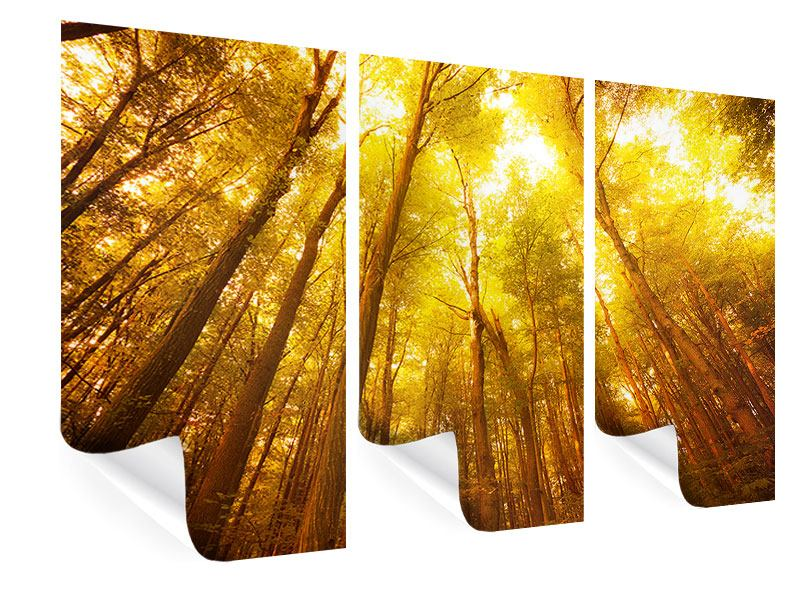 Poster 3-teilig Herbstwald