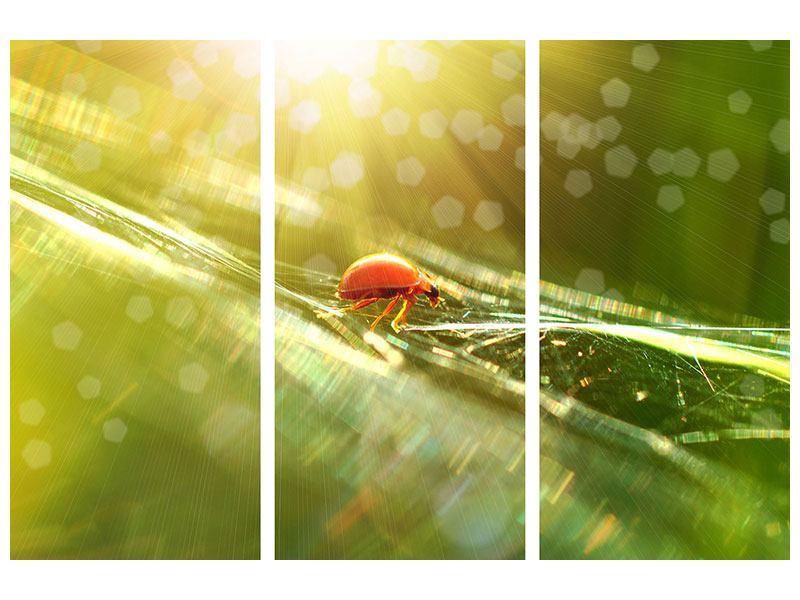 Poster 3-teilig Marienkäfer im Sonnenlicht