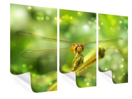 Poster 3-teilig XXL-Libelle