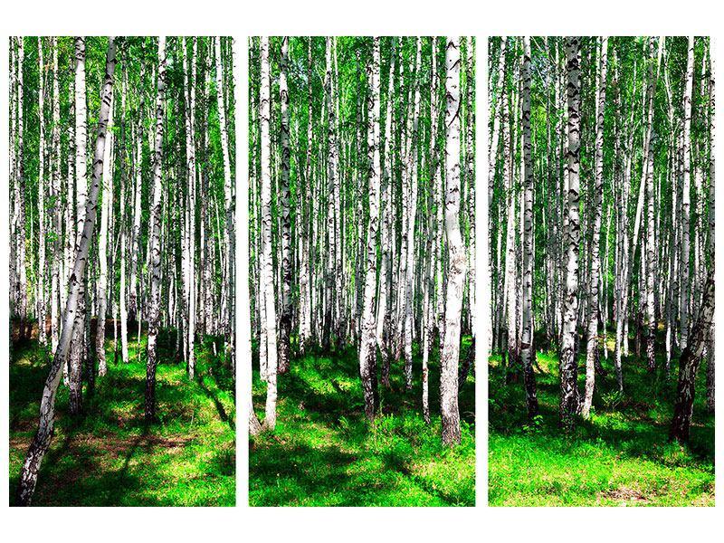 Poster 3-teilig Sommerlicher Birkenwald