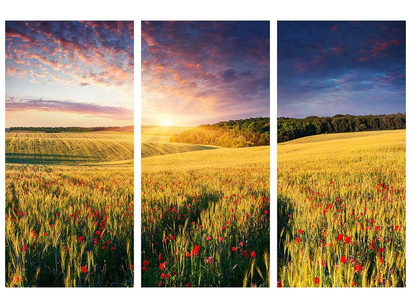 Poster 3-teilig Ein Blumenfeld bei Sonnenaufgang