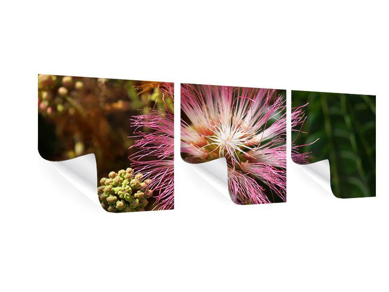 Panorama Poster 3-teilig Die Regenbaumblüte