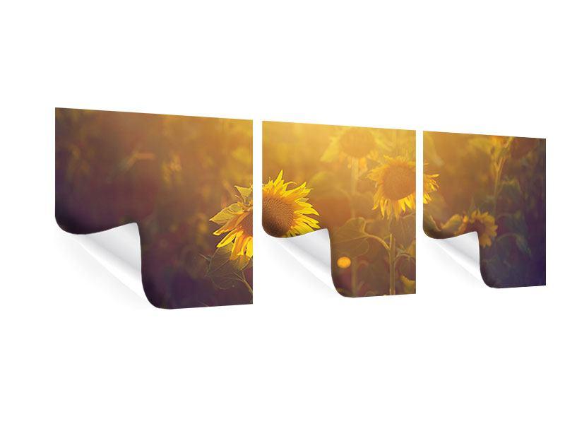 Panorama Poster 3-teilig Sonnenblumen im goldenen Licht