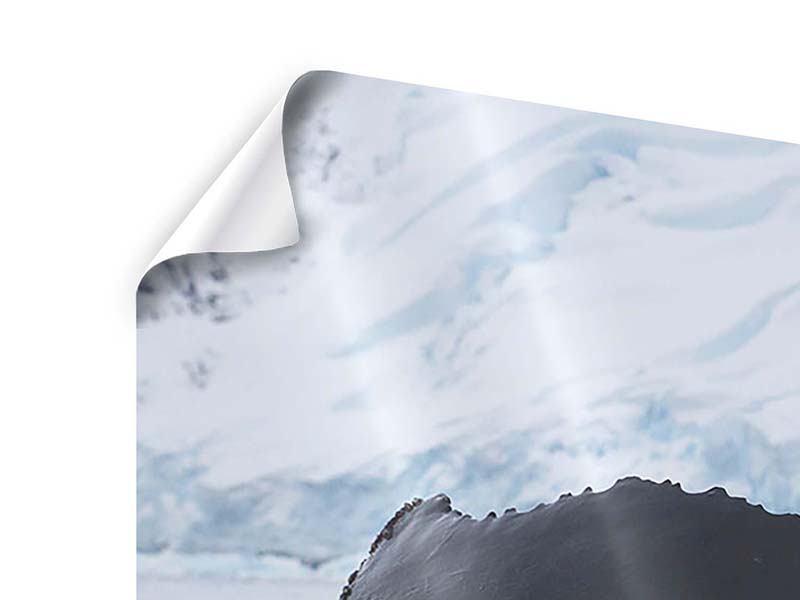 Panorama Poster 3-teilig Der Buckelwal
