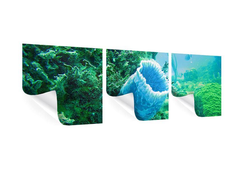Panorama Poster 3-teilig Korallen
