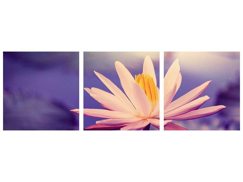 Panorama Poster 3-teilig Lotus bei Sonnenuntergang