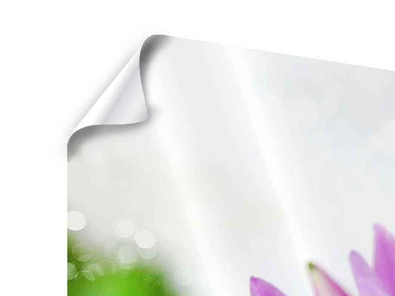 Panorama Poster 3-teilig Die Lotus mit Biene