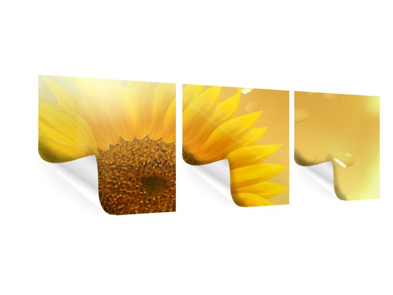 Panorama Poster 3-teilig Sonnenblume im Morgentau