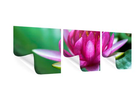 Panorama Poster 3-teilig Lotus in Pink