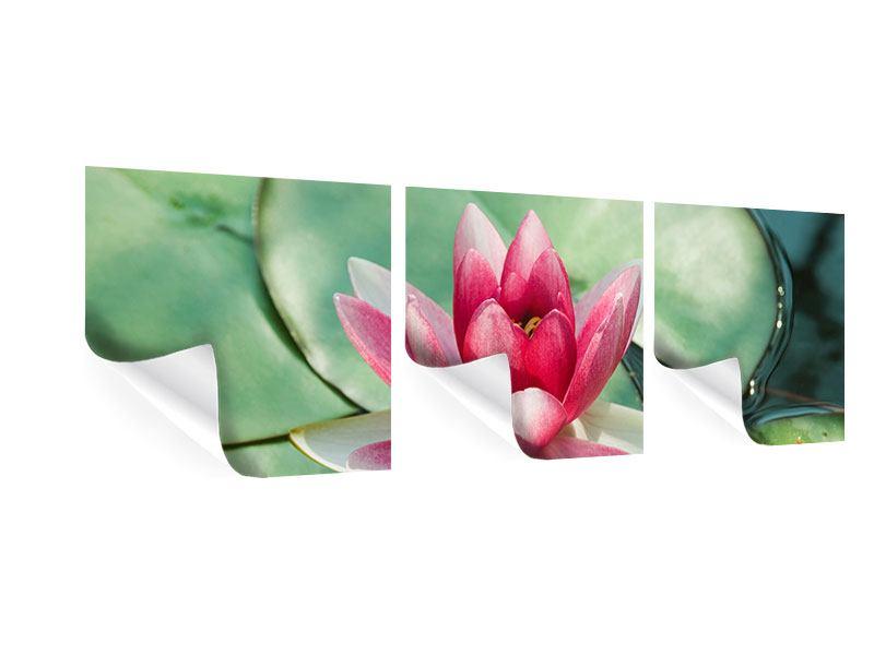 Panorama Poster 3-teilig Der Frosch und das Lotusblatt