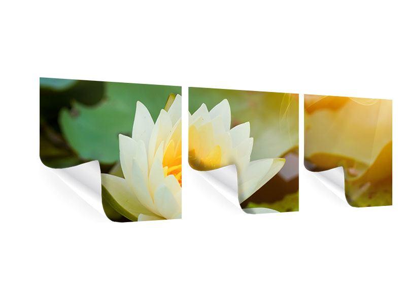 Panorama Poster 3-teilig Romantische Seerose