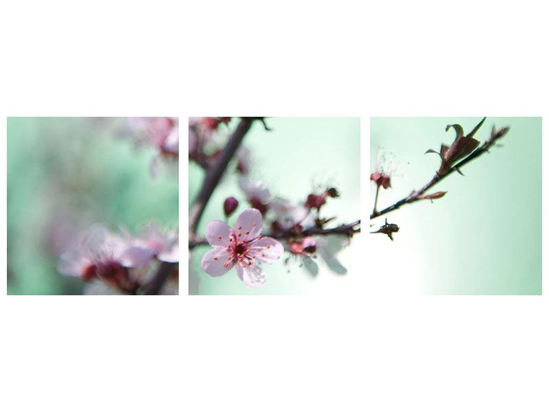 Panorama Poster 3-teilig Die japanische Kirschblüte