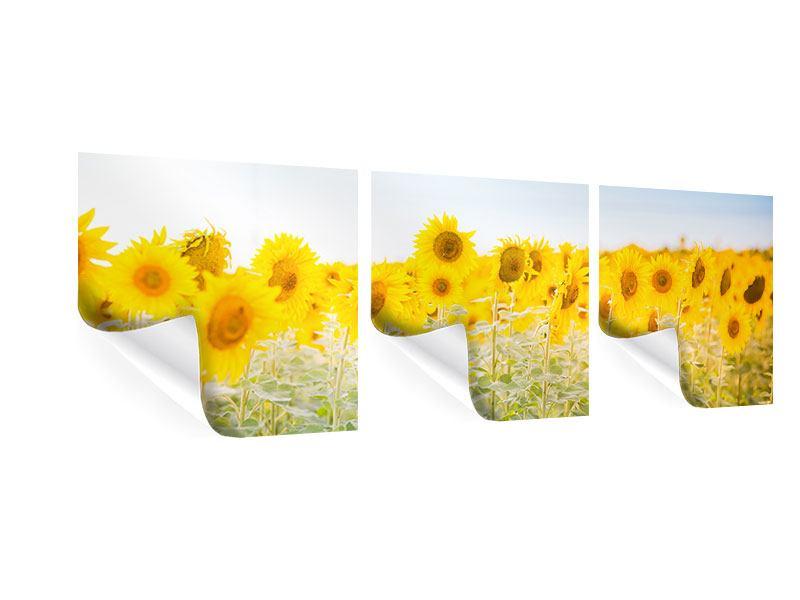 Panorama Poster 3-teilig Im Sonnenblumenfeld