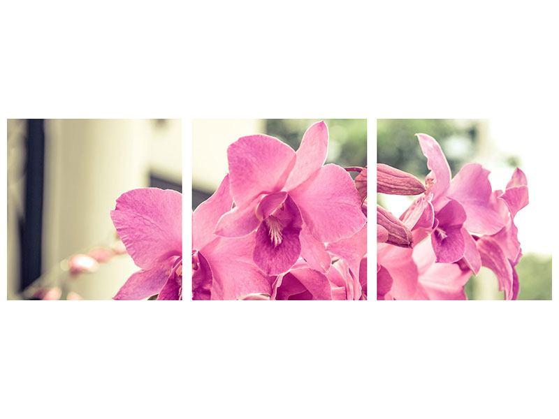 Panorama Poster 3-teilig Ein Fensterplatz für die Orchideen