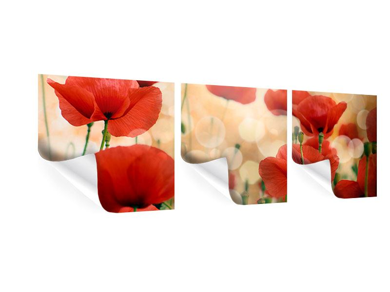 Panoramic 3 Piece Poster The Poppy
