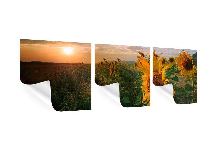 Panorama Poster 3-teilig Sonnenblumen im Lichtspiel