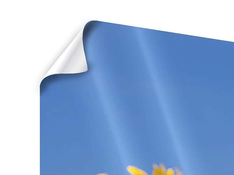 Panorama Poster 3-teilig Himmlische Sonnenblumen