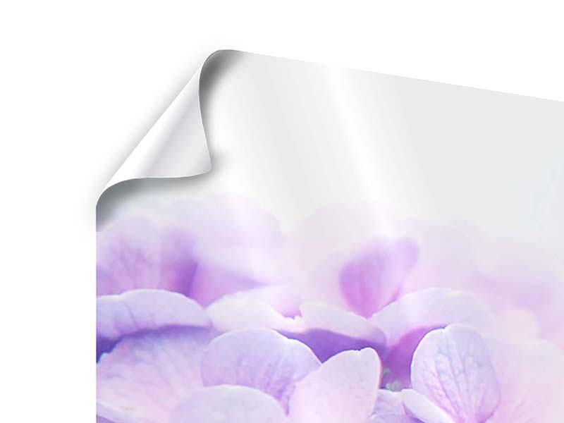 Panorama Poster 3-teilig Hortensien