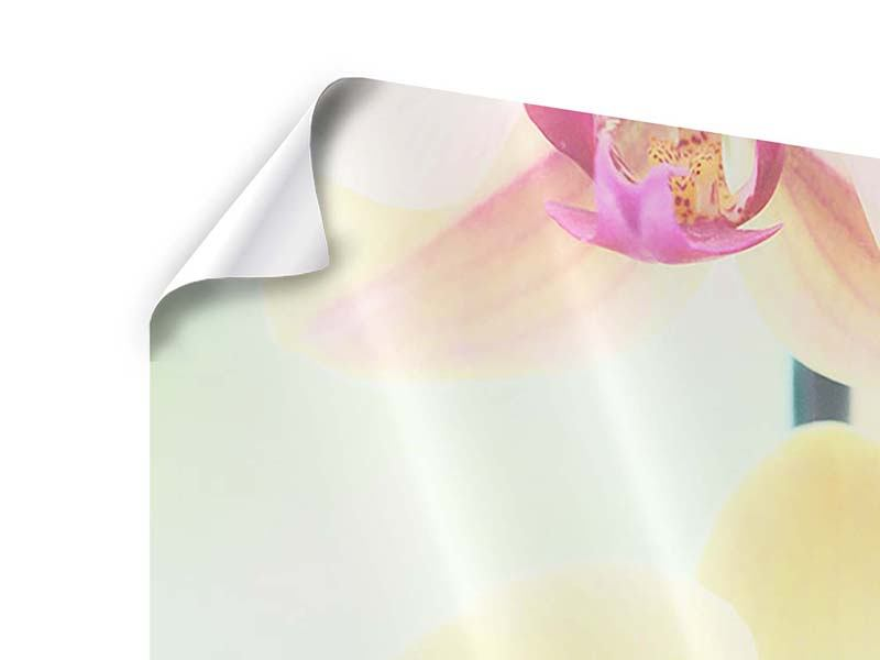 Panorama Poster 3-teilig Lovely Orchidee