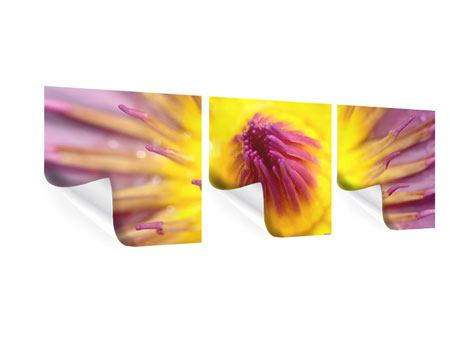 Panorama Poster 3-teilig XXL-Lotus