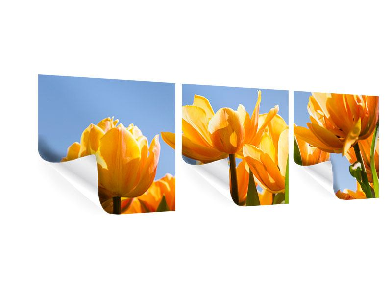 Panorama Poster 3-teilig Märchenhafte Tulpen