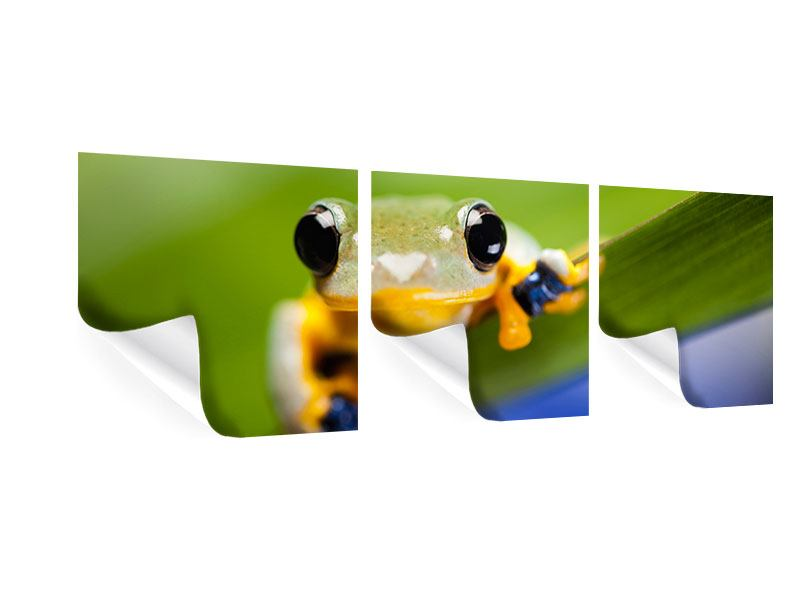 Panorama Poster 3-teilig Frosch XXL