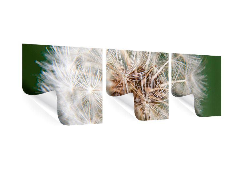 Panorama Poster 3-teilig Riesenlöwenzahn