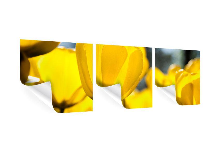 Panorama Poster 3-teilig Gelbe Tulpen in XXL