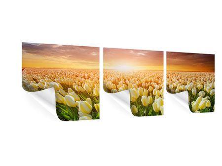 Panorama Poster 3-teilig Sonnenaufgang bei den Tulpen
