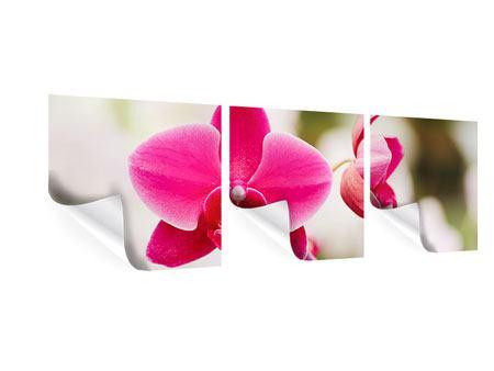 Panorama Poster 3-teilig Perspektivische Orchideen