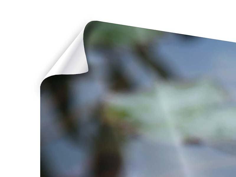 Panorama Poster 3-teilig Das Seerosenduo