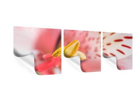 Panorama Poster 3-teilig Der Lilienstempel