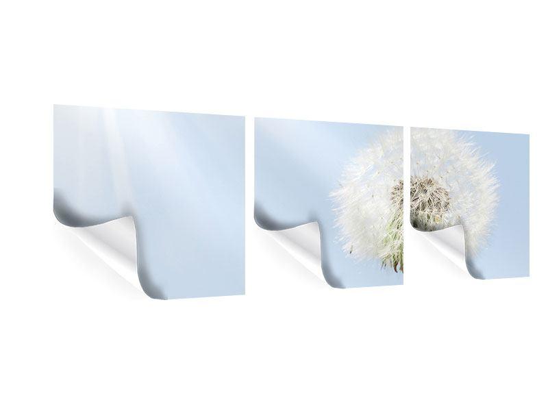 Panorama Poster 3-teilig Der Löwenzahn im Sonnenstrahl