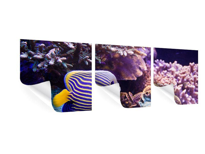 Panorama Poster 3-teilig Faszination Unterwasser