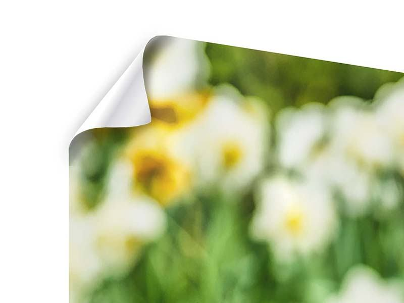 Panorama Poster 3-teilig Ein Garten mit Tulpen