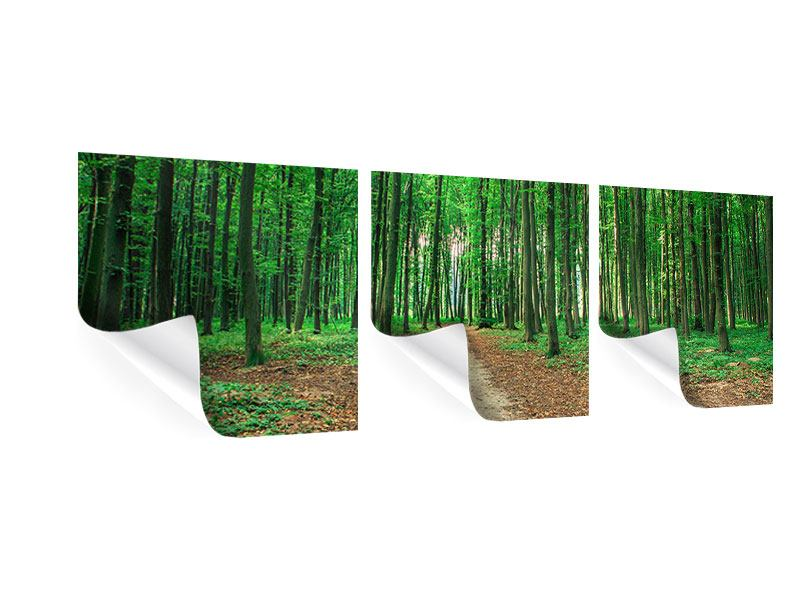 Panorama Poster 3-teilig Tannenwald