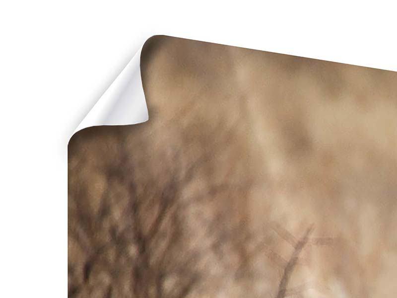 Panorama Poster 3-teilig Eleganter Gepard