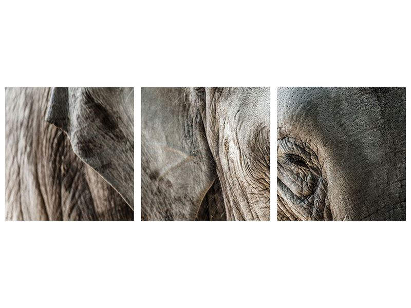 Panorama Poster 3-teilig Close Up Elefant
