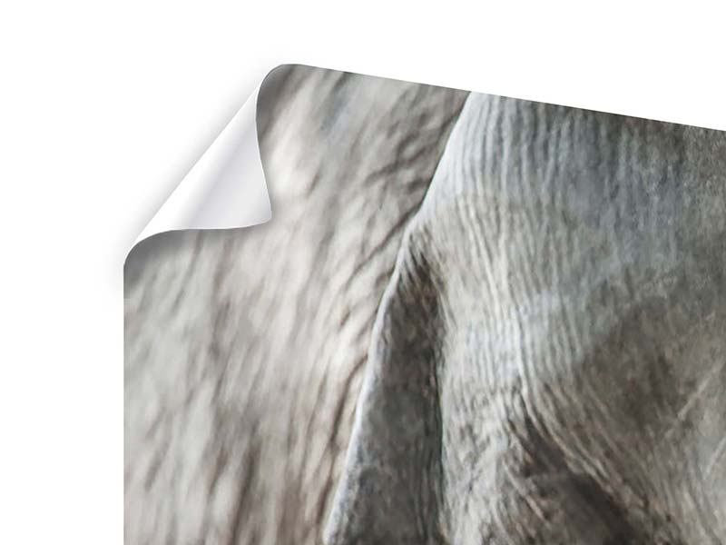 Panorama Poster 3-teilig Close Up Elefant