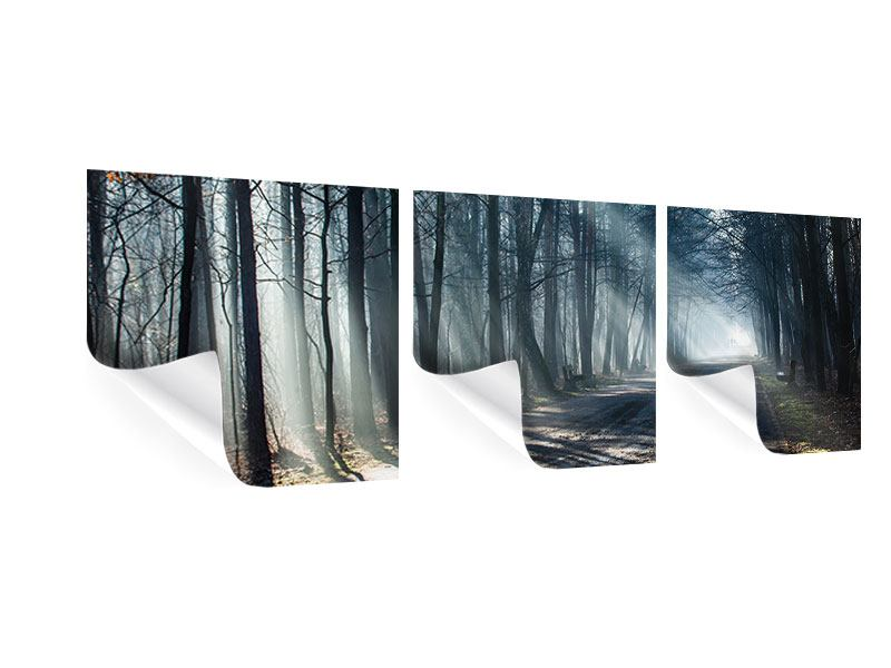 Panorama Poster 3-teilig Wald im Lichtstrahl