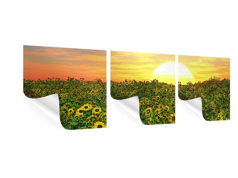 Panorama Poster 3-teilig Blumenpanorama bei Sonnenuntergang