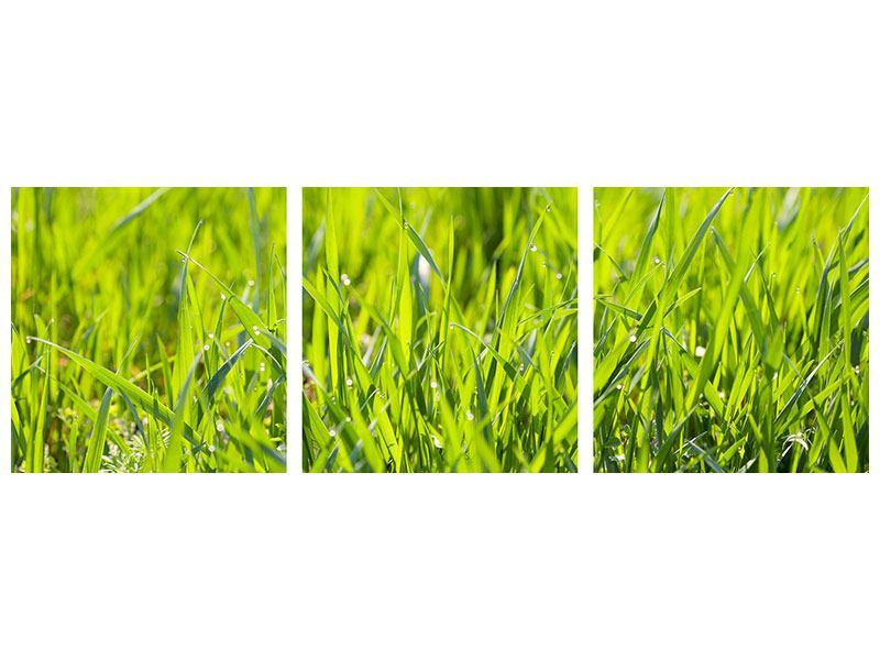 Panorama Poster 3-teilig Gras im Morgentau