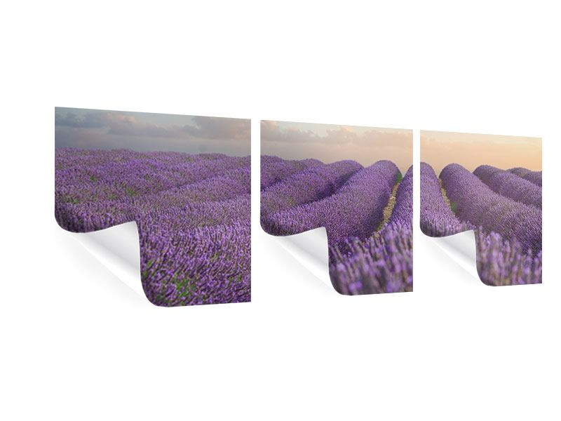 Panorama Poster 3-teilig Das blühende Lavendelfeld