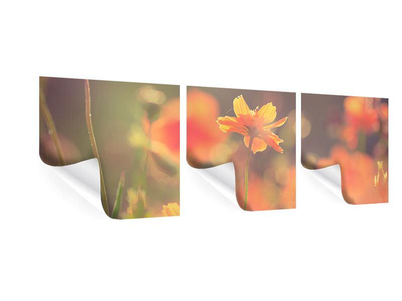 Panorama Poster 3-teilig Blütenpracht