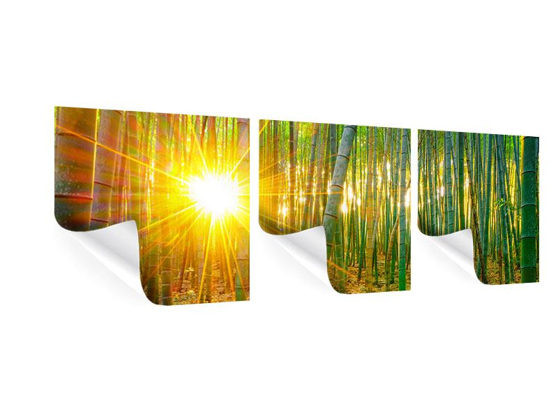 Panorama Poster 3-teilig Bambusse
