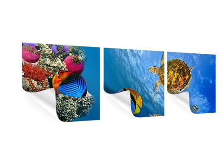 Panorama Poster 3-teilig Fisch im Wasser